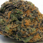 Best Sativa Strain – Sour Diesel