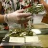 Cannabis States