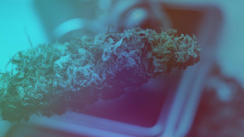 Top Cannabis Strains in California up close.