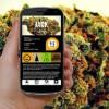 Top Marijuana Apps For Business