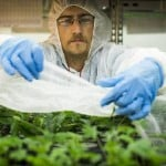 Largest Marijuana Growers in America