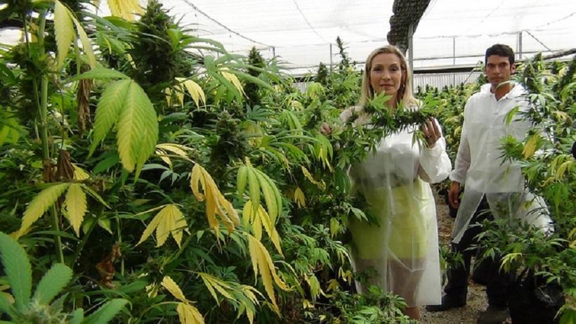 Best marijuana companies in Washington. Two people standing in a marijuana grow.