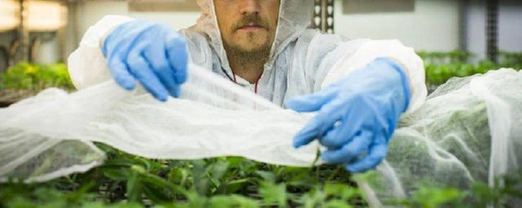 Top Attributes to Become a Successful Marijuana Grower