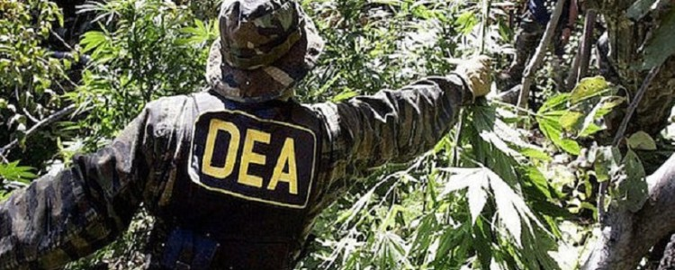 Top Reasons Why Illegal Marijuana Existed