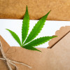 Top Cannabis Delivery Services in Colorado