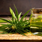 Top weed strains with Pinene Terpene