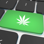Best marijuana blogs