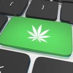 Best marijuana blogs