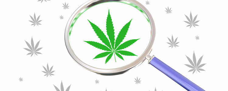 Top Marijuana Myths Hard To Dispel