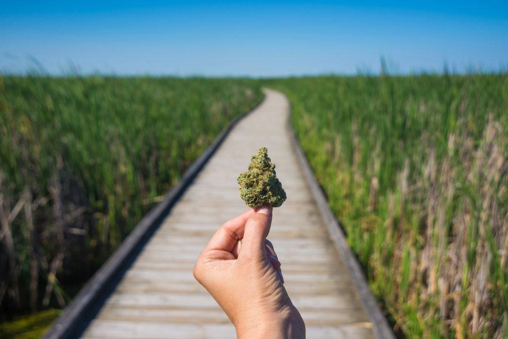 Craft Marijuana. Cannabis being held up.