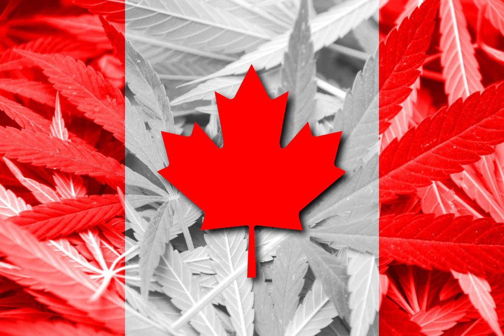 Real Reason For Marijuana Legalization In Canada. Canadian flag with a pot leaf.