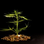 The Best Marijuana Business Ideas To Consider