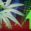 Top Marijuana Stocks To Purchase