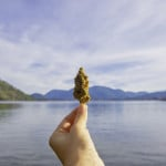 Top Ways Marijuana Dispensaries Transform Local Communities