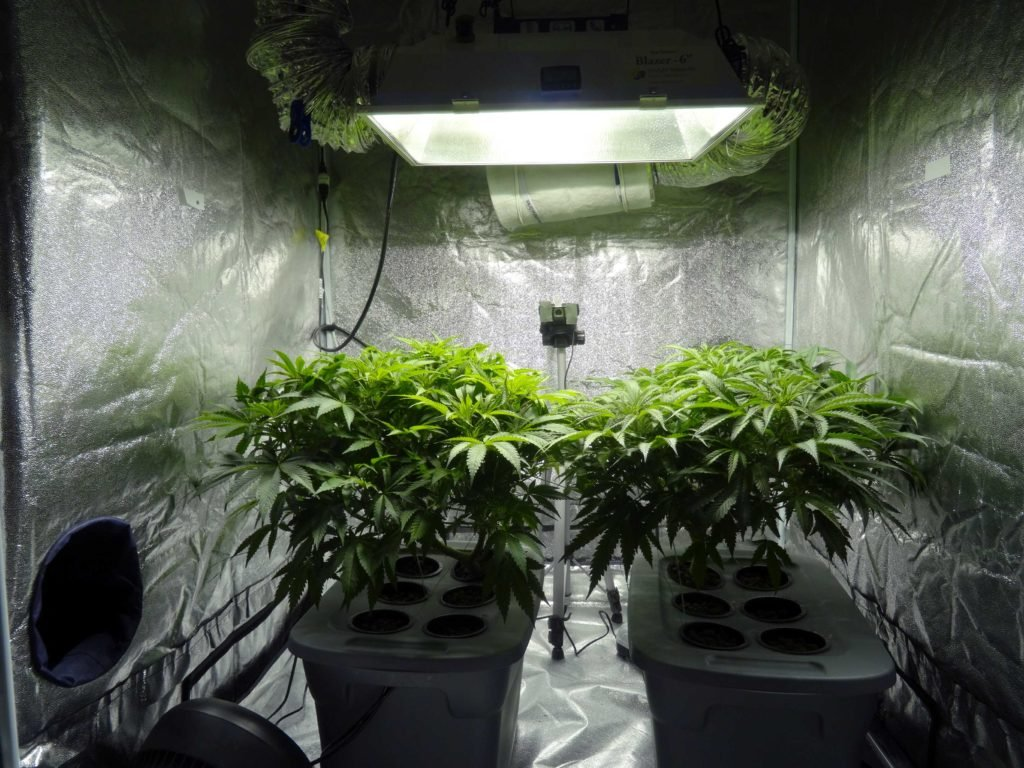 How Cannabis Grow Room Air Exchange Works