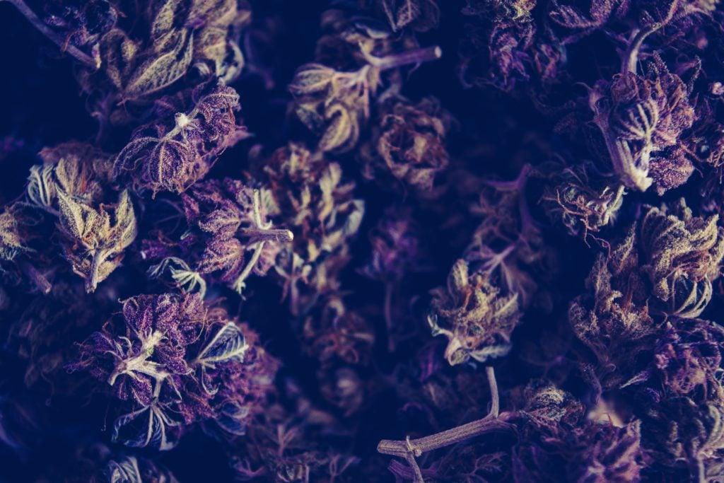 Miracle Alien Cookie marijuana strain review. Brown kush
