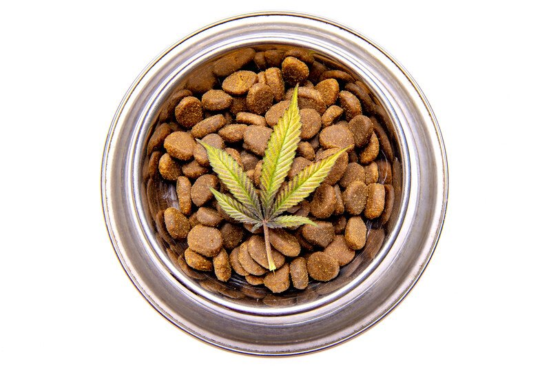 bowl of dog food with marijuana leaf, medical marijuana for dogs recipe