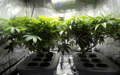 5 Cheapest Marijuana Grow Kits on Amazon