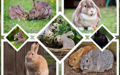 7 Benefits of CBD For Rabbits