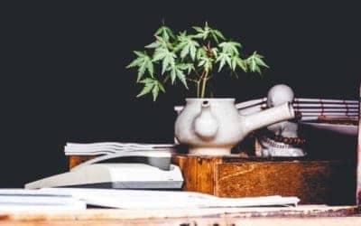 7 Marijuana Strains to Excite New Growers In 2020