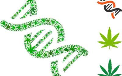 Best Tips On Selecting Marijuana Genetics