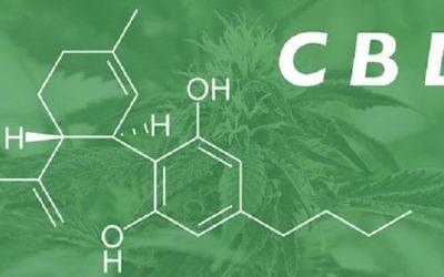 Top CBD Seeds