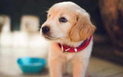 Homemade CBD Topical Salves For Dogs