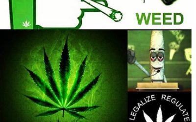 Best Cannabis Apps