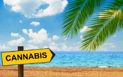 Top Unexpected Cannabis Benefits
