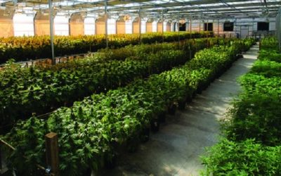 Best Cannabis Business Practices