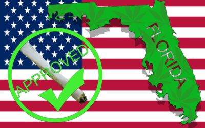Top 5 Marijuana Attorneys In Florida