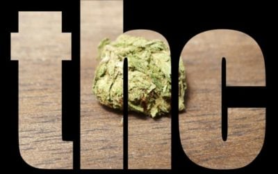 Fun THC Facts That May Make You Smile