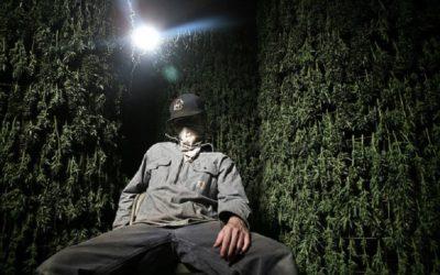 Top Marijuana Documentaries To Watch