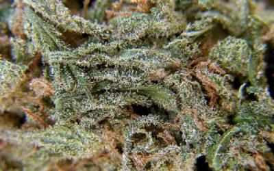 Top Marijuana Strains To Reduce Stress