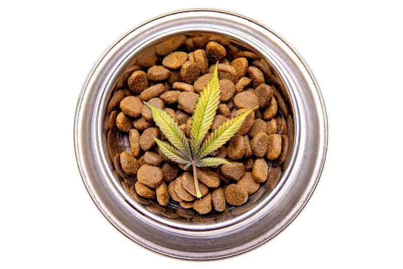 Delicious Medical Marijuana For Dogs Recipe