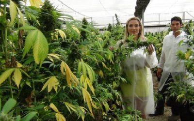 Best Pot Companies in Washington