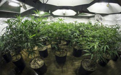How To Set Up Your First Marijuana Grow Room