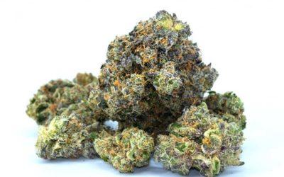 The Strongest Marijuana Strains in 2017-Updated 2021