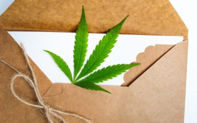 Top Cannabis Box Subscription to Consider