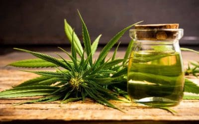 Top Cannabis Strains With Pinene Terpene