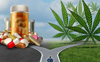 Top Marijuana Dispensaries As Game Changers