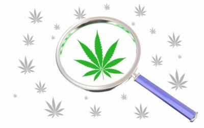 Top Marijuana Myths Hard To Dispel