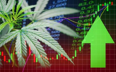 Top Marijuana Stocks To Purchase-2019