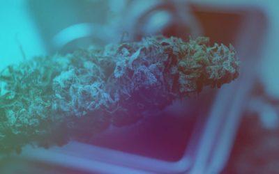 Top Marijuana Strains in California