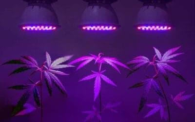 50 Best Marijuana Grow Lights