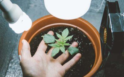Top Marijuana Grow Room Equipment for Quality Buds