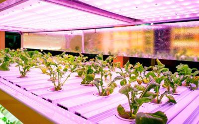 Top Methods Of Growing Organic Cannabis Plants