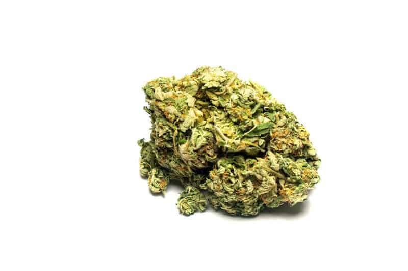 marijuana bud on isolated white, orange cookies strain