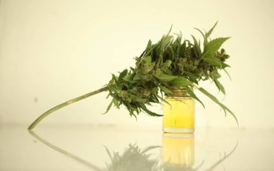 Top Benefits of CBD & THC Strains for Pain